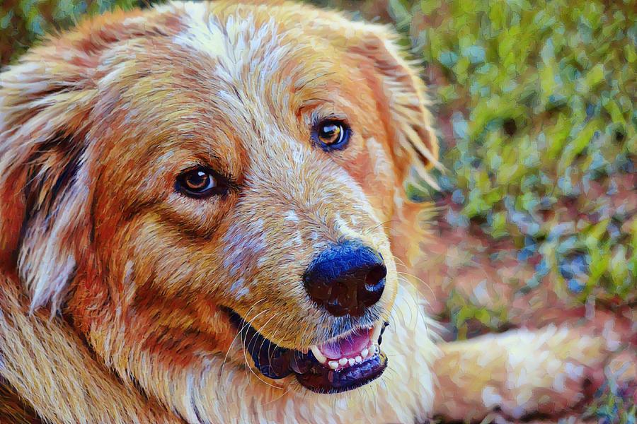 Happy Dog On A Spring Day Digital Art