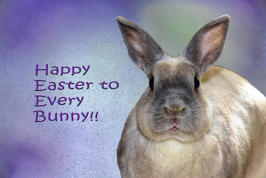 Happy Easter To Every Bunny Photograph