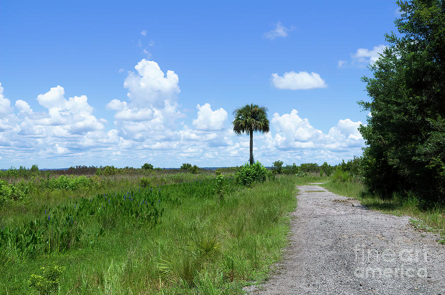 Florida Photograph - Happy Hiking, Trail In Paynes Prairie State Park, Florida by Felix Lai