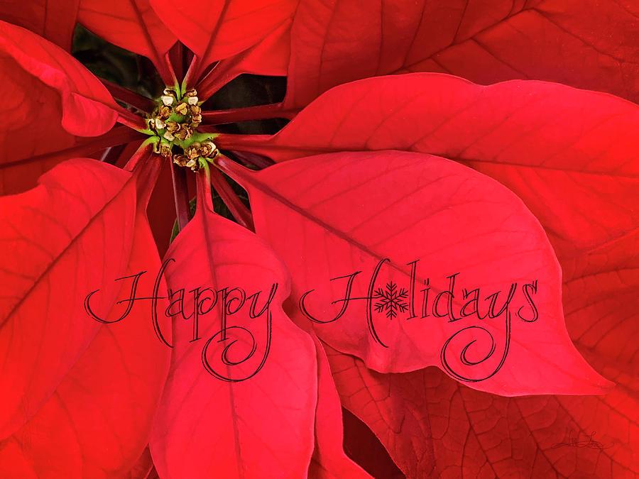 Happy Holidays Photograph