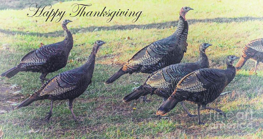Happy Thanksgiving - Wild Turkeys Photograph