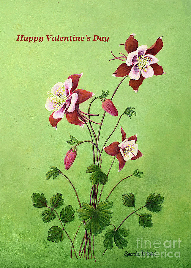 Happy Valentine's Day - Eastern Red Columbine by Sarah Irland