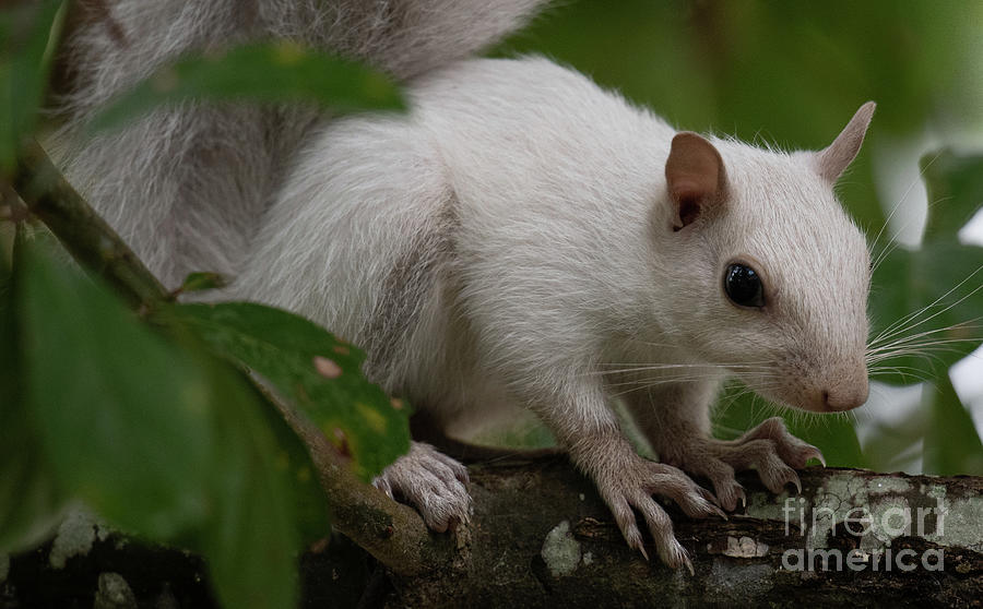 Harry Pottter Wizard White Squirrel Photograph