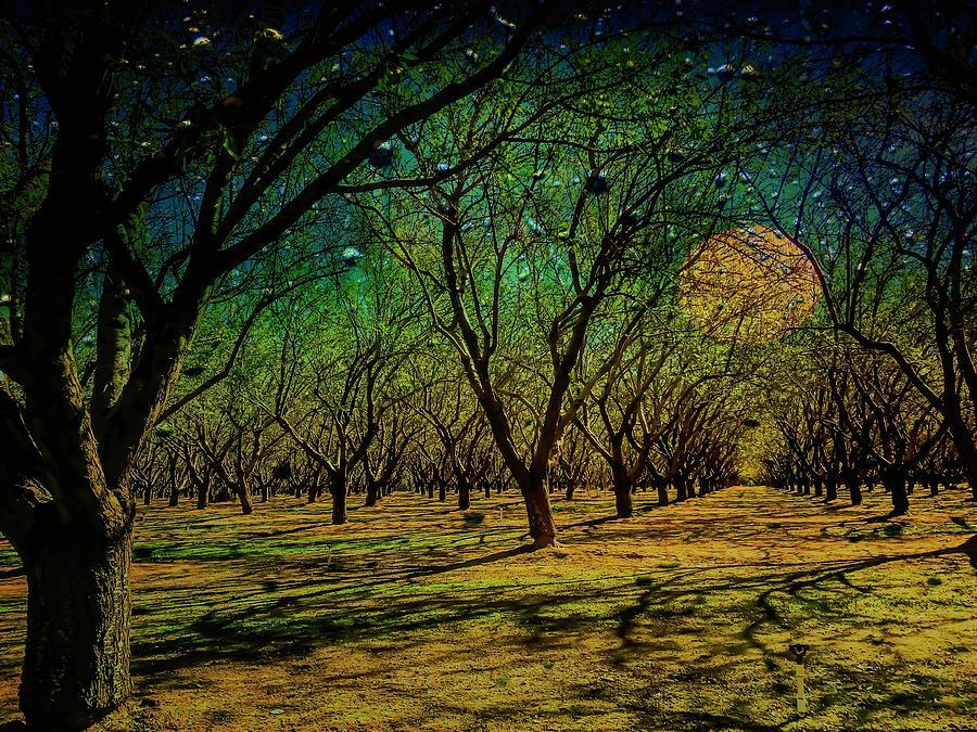 Harvest Moon Photograph