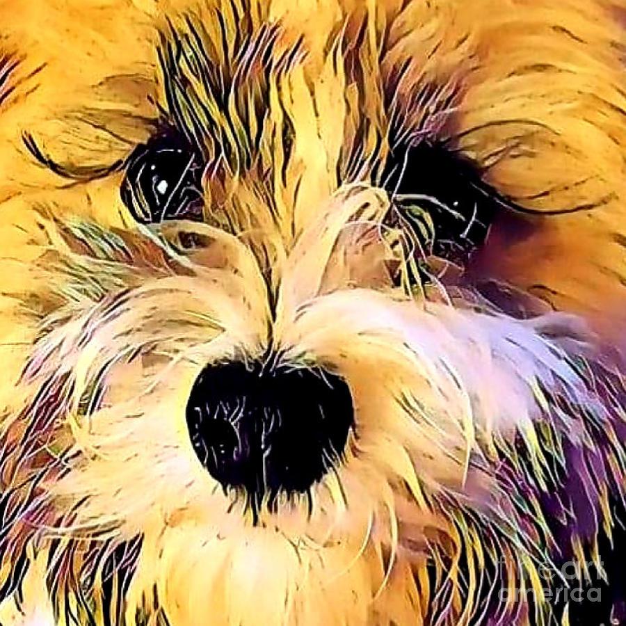 Havanese Puppy Love Photograph