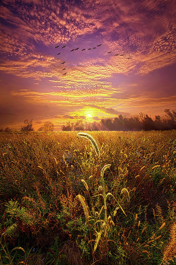 Have Faith in the Small Things by Phil Koch