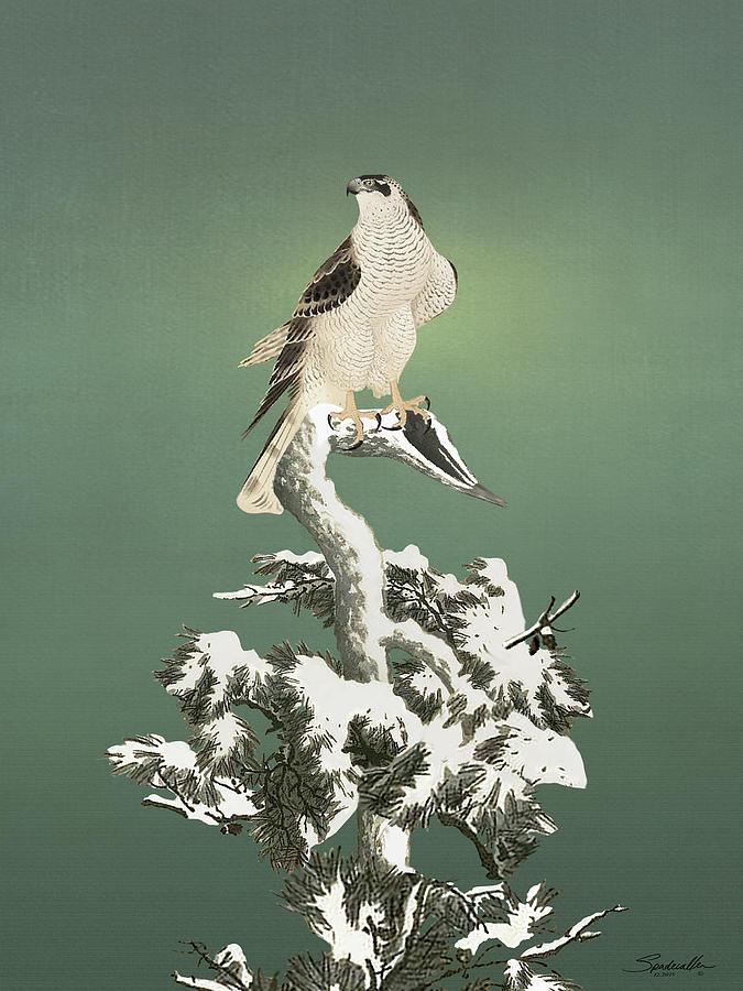 Hawk in Snowy Pine  by Spadecaller
