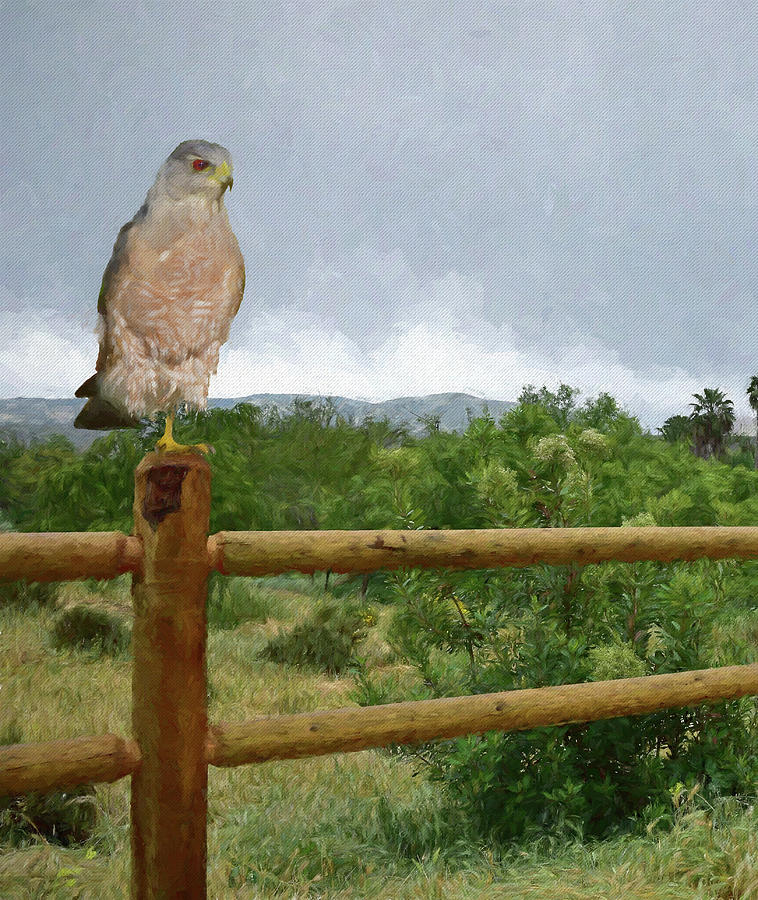 Hawk on Fence Post by Linda Brody