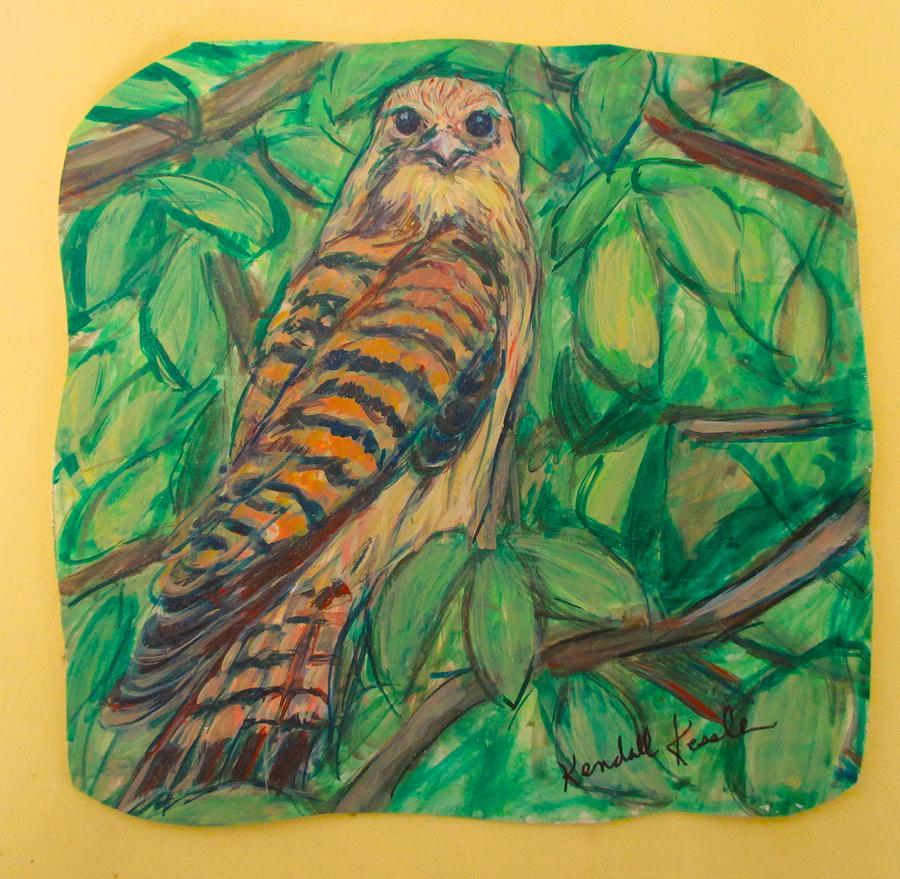 Hawk Stare by Kendall Kessler