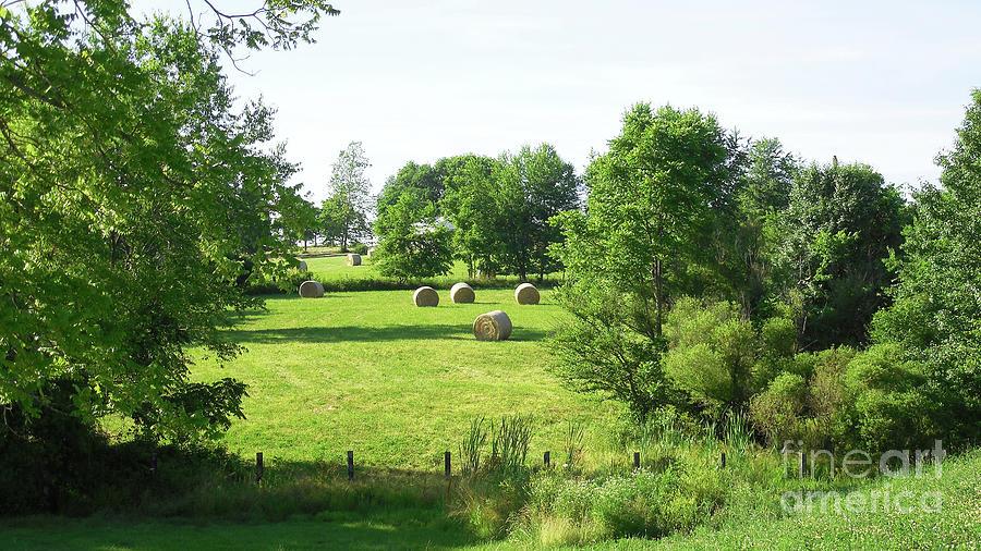 Hay Field In June Photograph