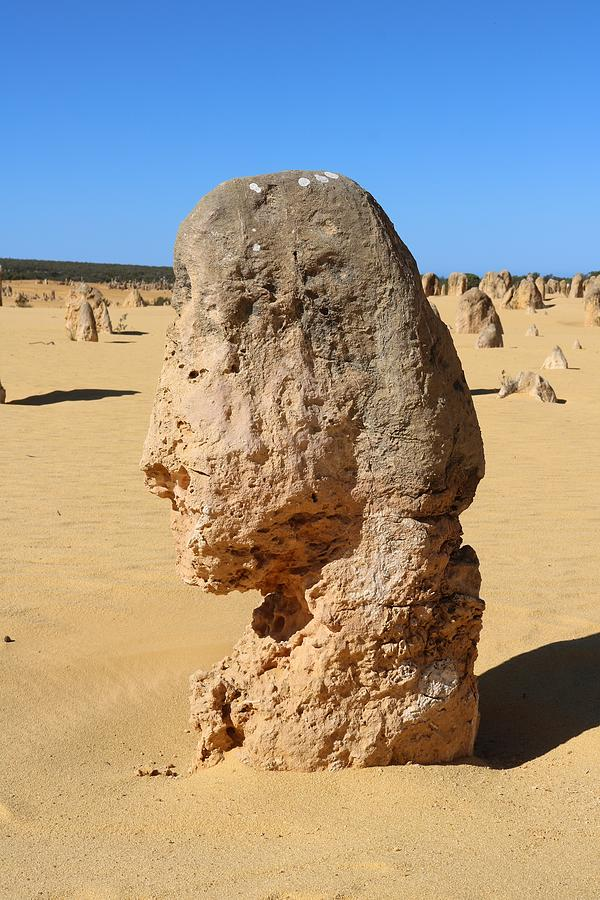 Head In The Desert Photograph