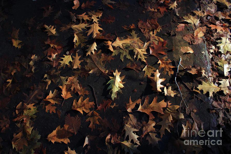 hearty oak by AnnMarie Parson-McNamara