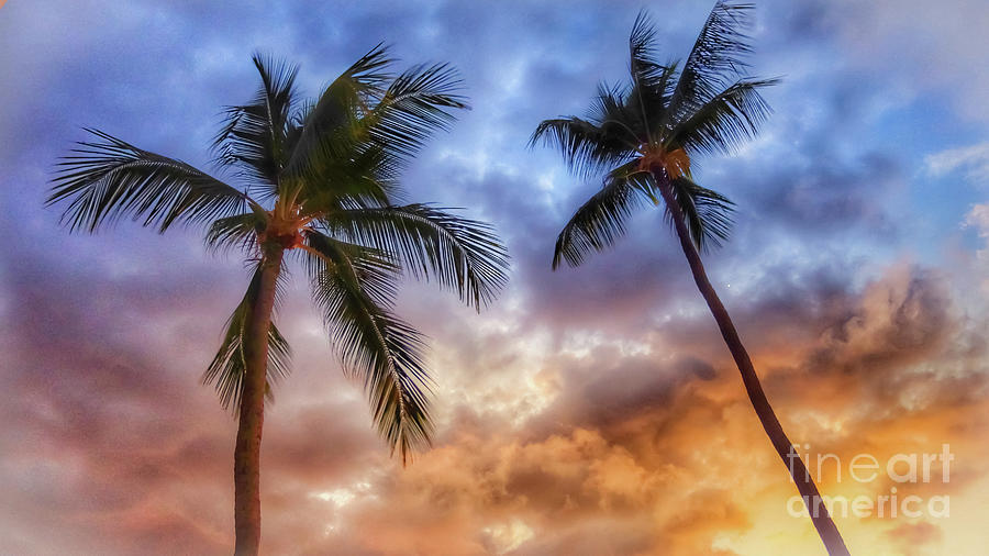 Heavenly Palms Photograph