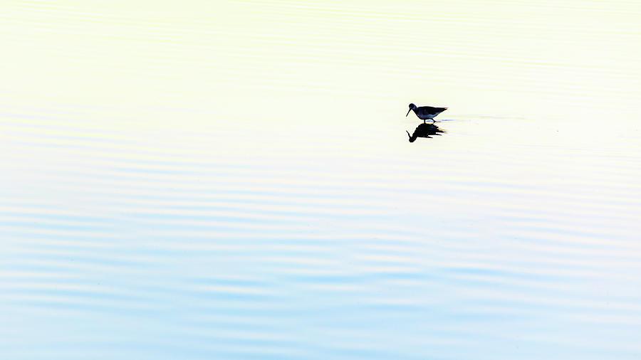 Heiwa Xi Photograph