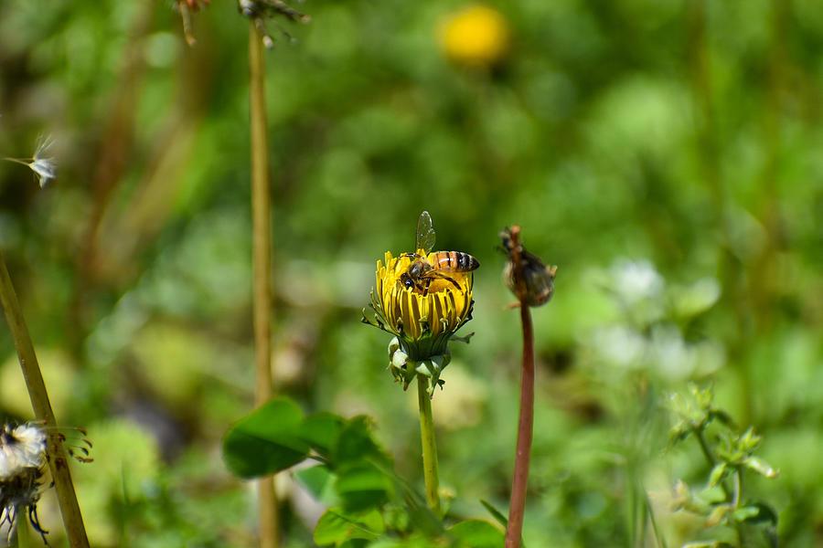 Hello Bee Photograph