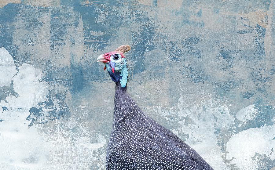 Helmeted Guineafowl Portrait by Eva Lechner
