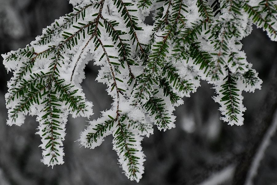 Hemlock and Hibernation Dust by Randy Bodkins