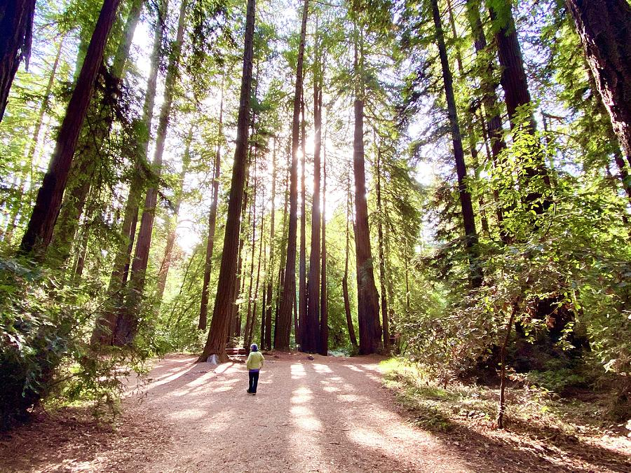 Henry Cowell Redwoods State Park Photograph by Gary Dance
