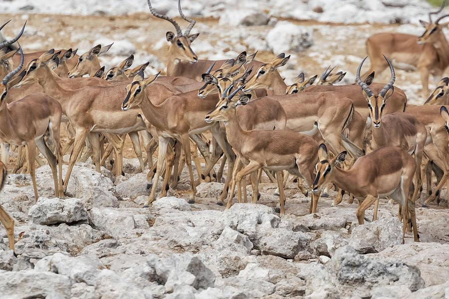 Herd Mentality by Belinda Greb