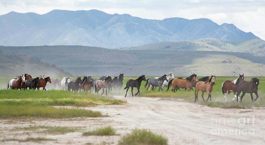 Nikon Photograph - Herd Run by Nicole Markmann Nelson