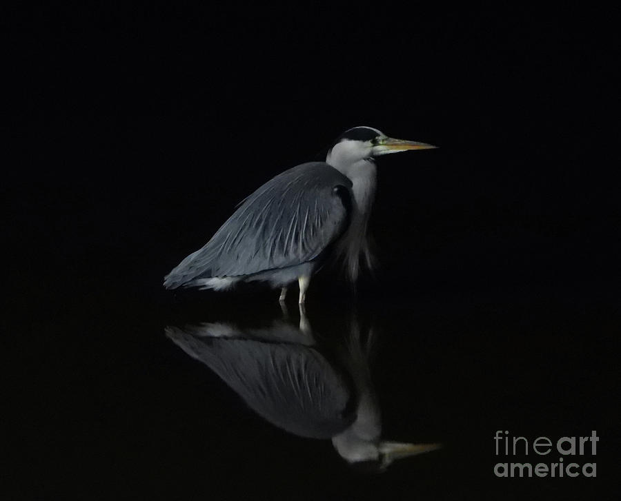 Heron Photograph by Andy Thompson