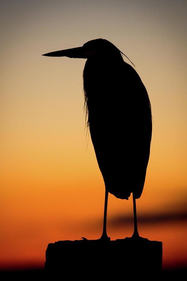 Heron Photograph - Heron Silhouette by Jake Sublett