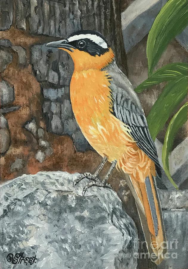 Heuglins Robin Painting