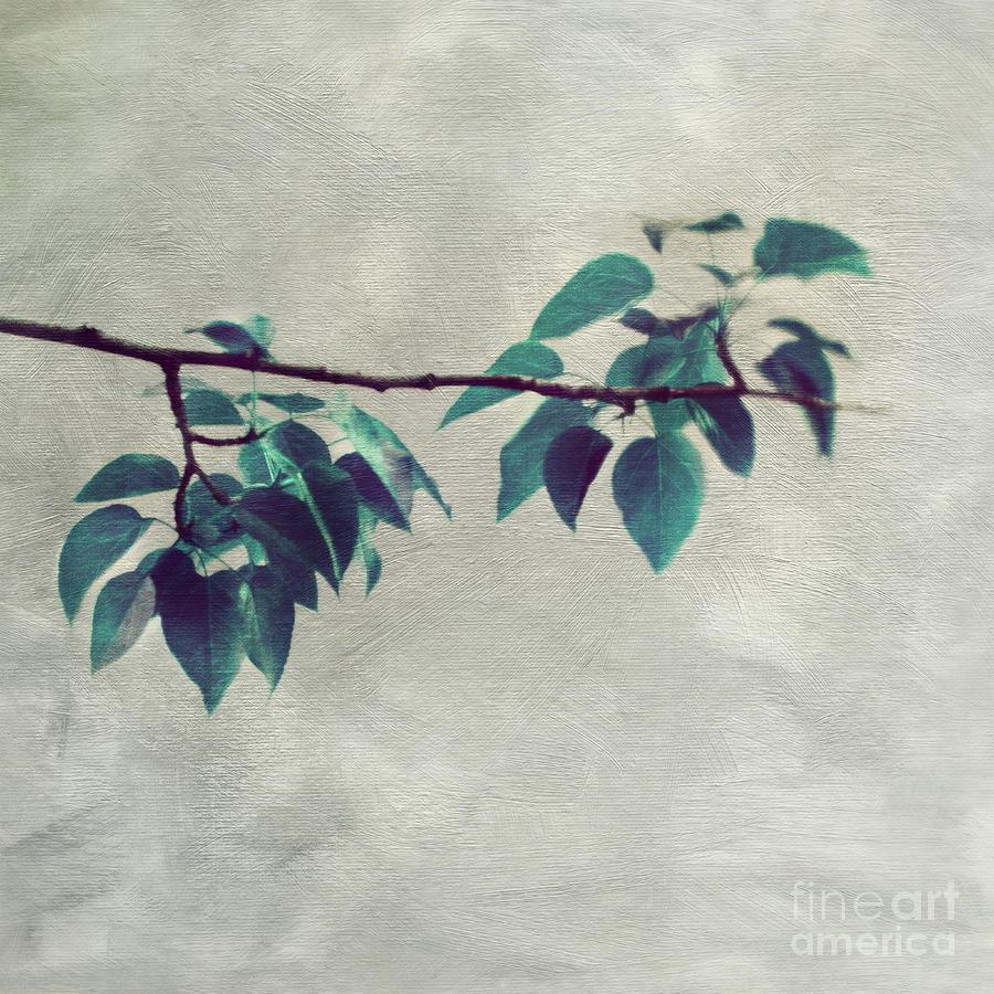 Simple leaves by Priska Wettstein