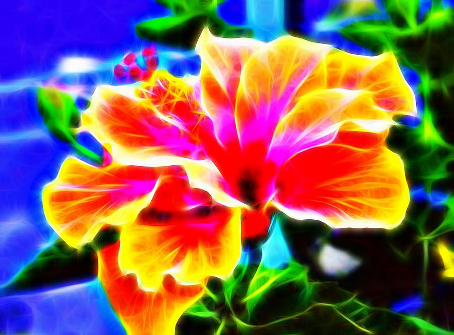 Hibiscus Abstract Photograph