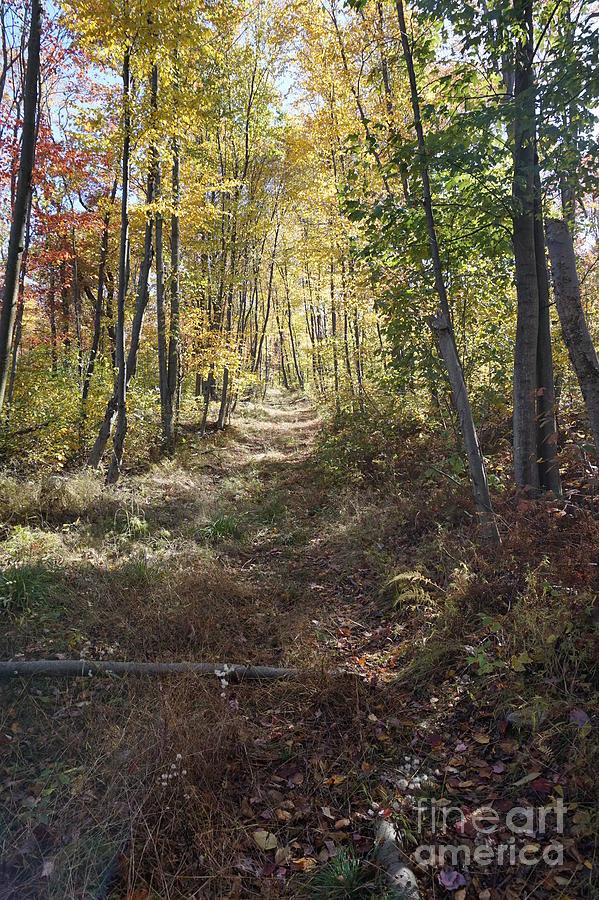 Hidden Trail Photograph by Chris Naggy