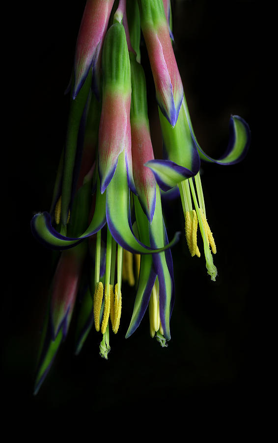 Bromeliad Photograph - Hidden Treasure by Siene Browne