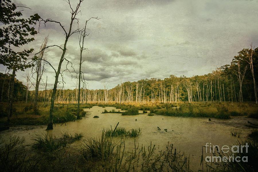 Hidden Wetlands by Debra Fedchin