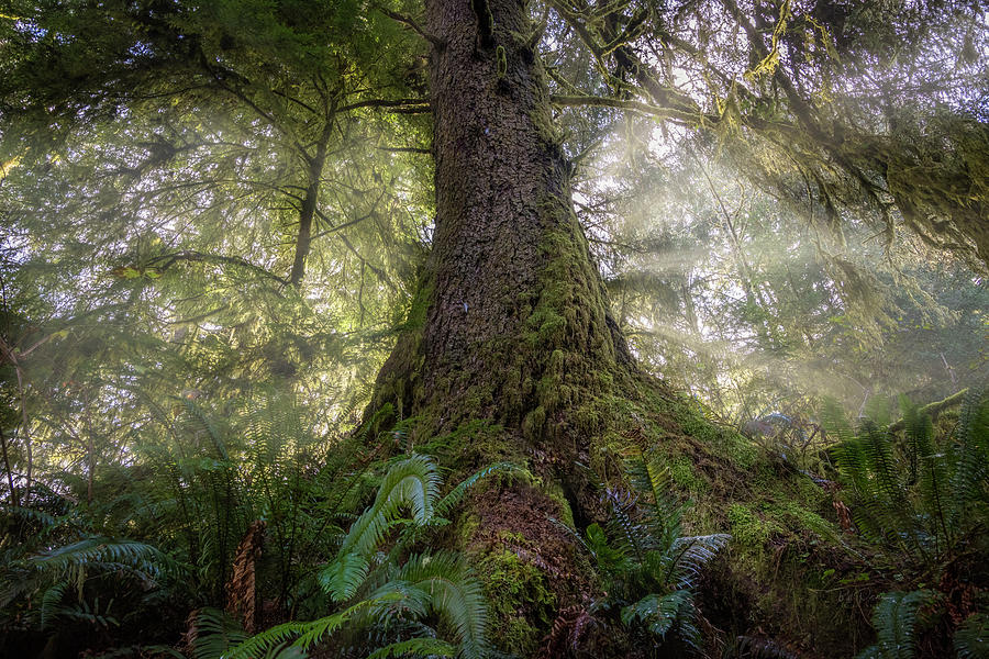 Hiding from the mist by Bill Posner