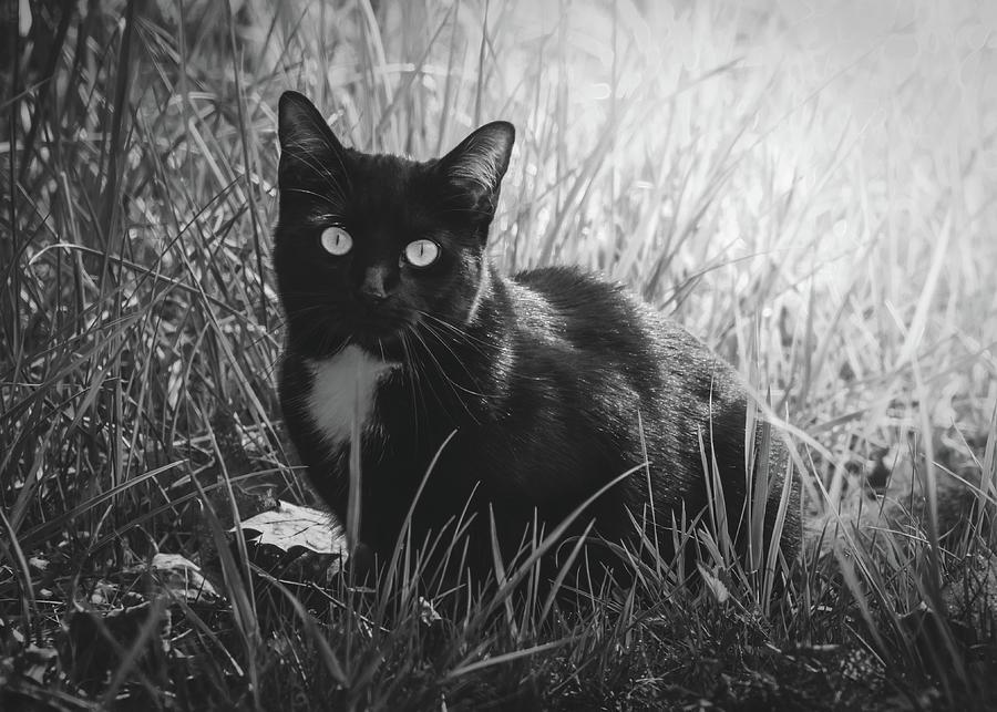 Hiding In The Grass by Bob Orsillo