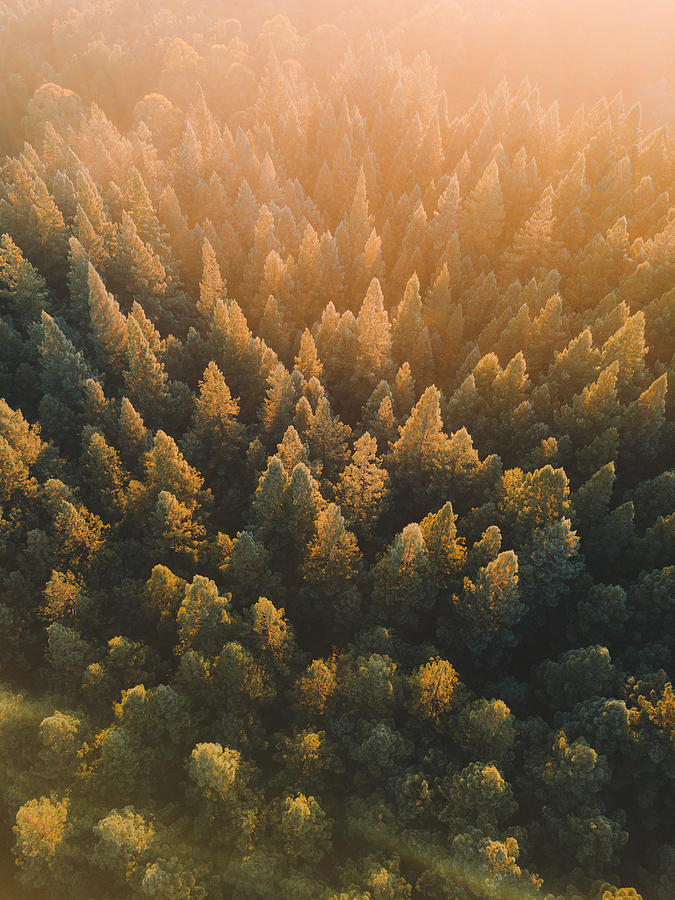 High Angle View Of Trees In Forest Photograph by Connor Vaughan / EyeEm