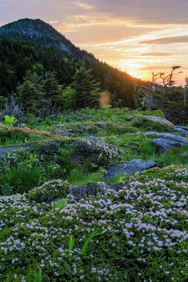 Blue Ridge Mountains Photograph - Highland Sunrise by Melissa Southern