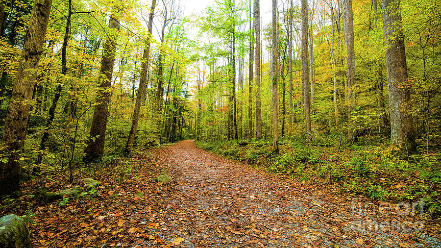 Hiking Trail Photograph - Hiking Trail, Autumn In Great Smoky Mountains by Felix Lai