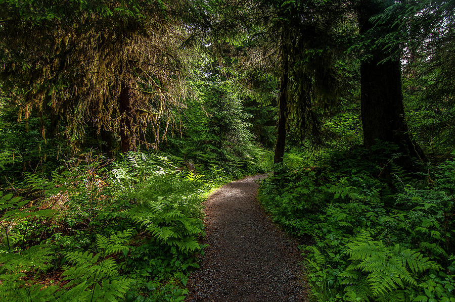 Ho Rainforest Trail by Matthew Irvin