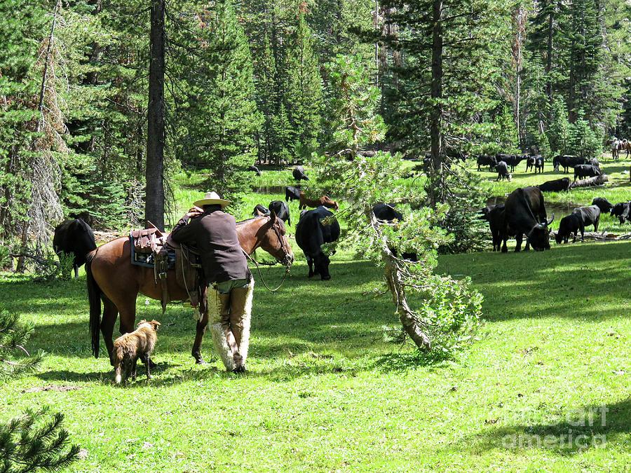 Holding Herd by Diane Bohna