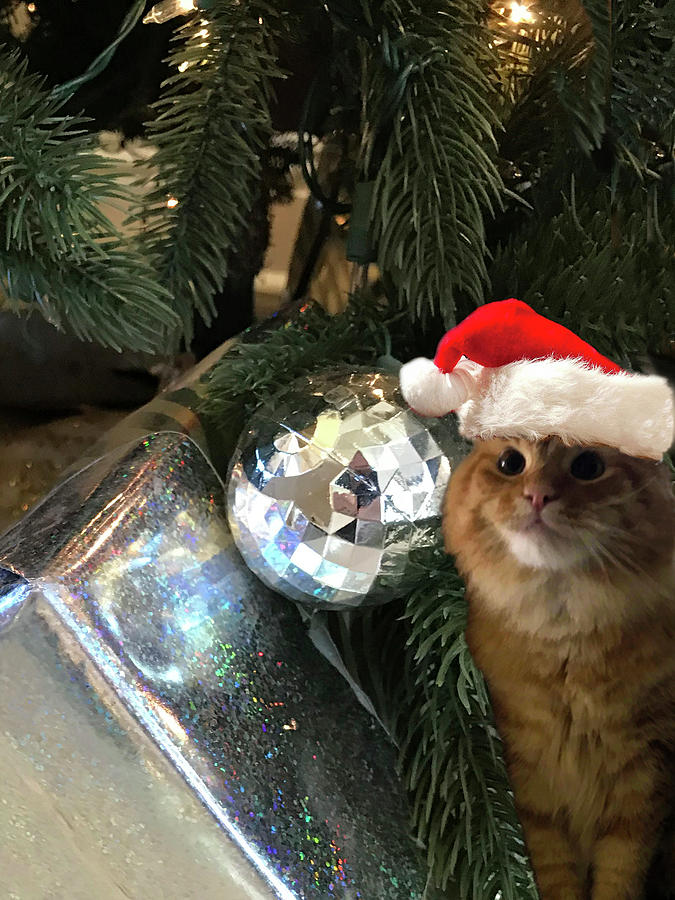 Holiday Purrs. Orange Tabby Cat Photograph by Karen Zuk Rosenblatt