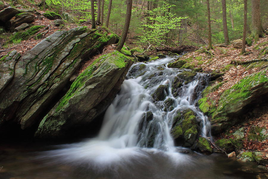 Holland Glen Waterfall In Spring Photograph