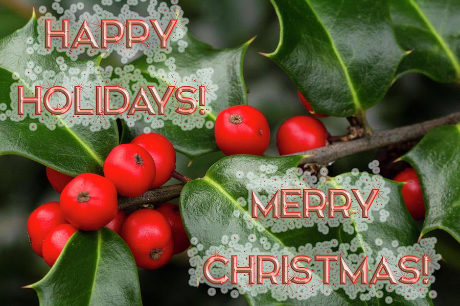 Holly Holiday Christmas Greeting Photograph