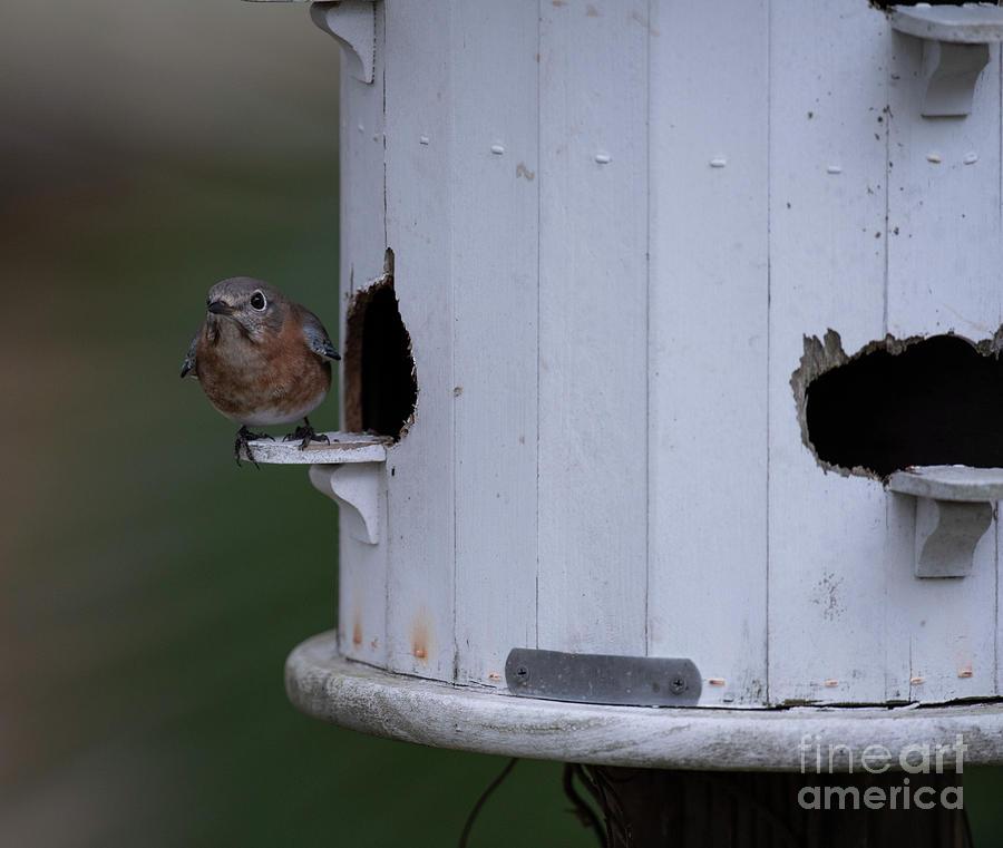 Home Renovations - Bird House Photograph
