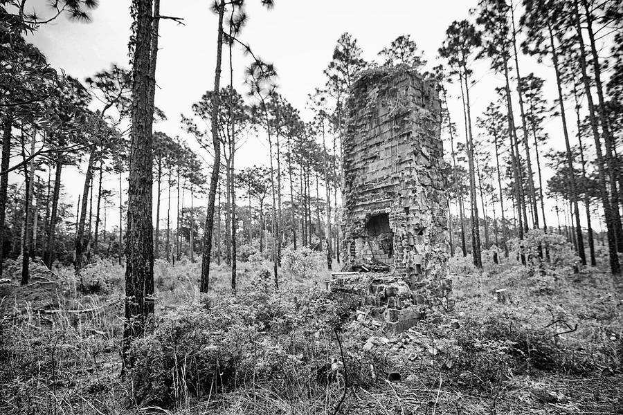 Homestead Ruins In The Croatan National Forest Photograph