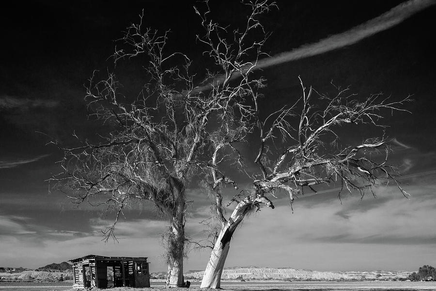 Bard Photograph - Homestead Tree by Jack and Darnell Est