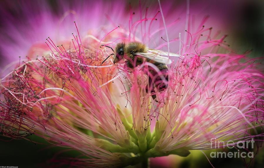Honey Bee At Work Photograph