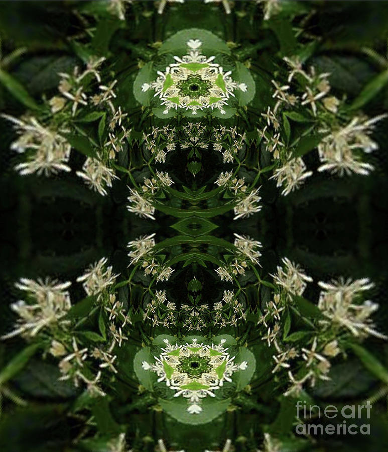 Honeysuckle Kaleidoscope Mirrored Digital Art