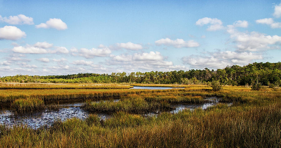White Oak River Wetlands by Bob Decker