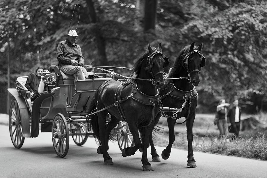 Horse-drawn Carriage Monochrome Photograph