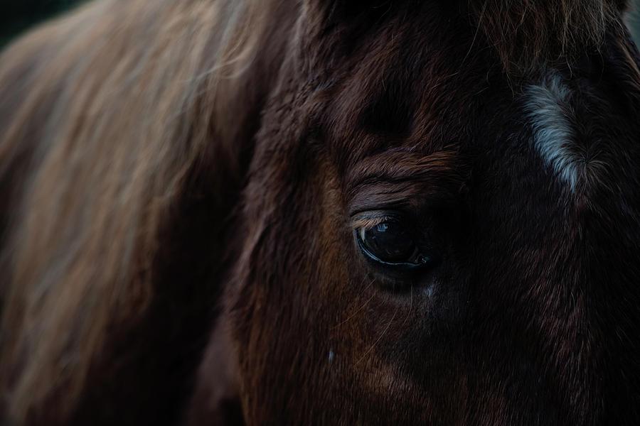 Horse eye by Teresa Blanton